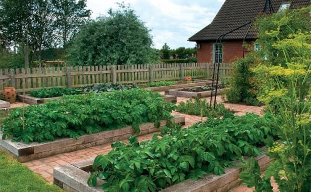 Raised beds should generally be just wide enough that you can reach the middle of the bed from each side without stepping into the soil, but you don't need to limit their length. These long timber beds supply plenty of room for a big crop of veggies.