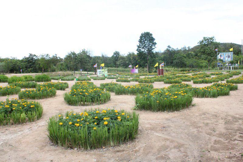 Thailand - Vetiver in a public garden