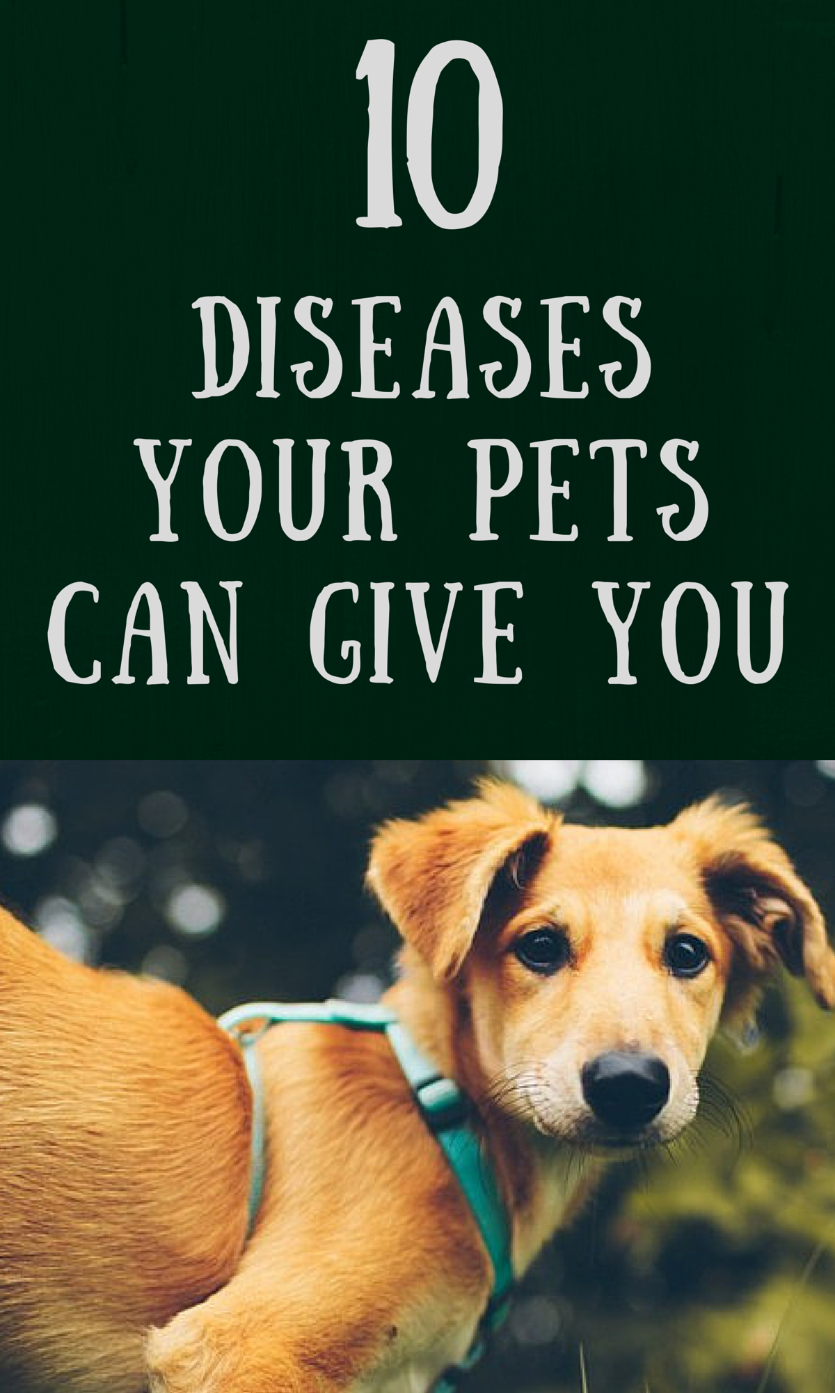 10 Diseases Your Pets Could Give You With Images Pets Pet Vet