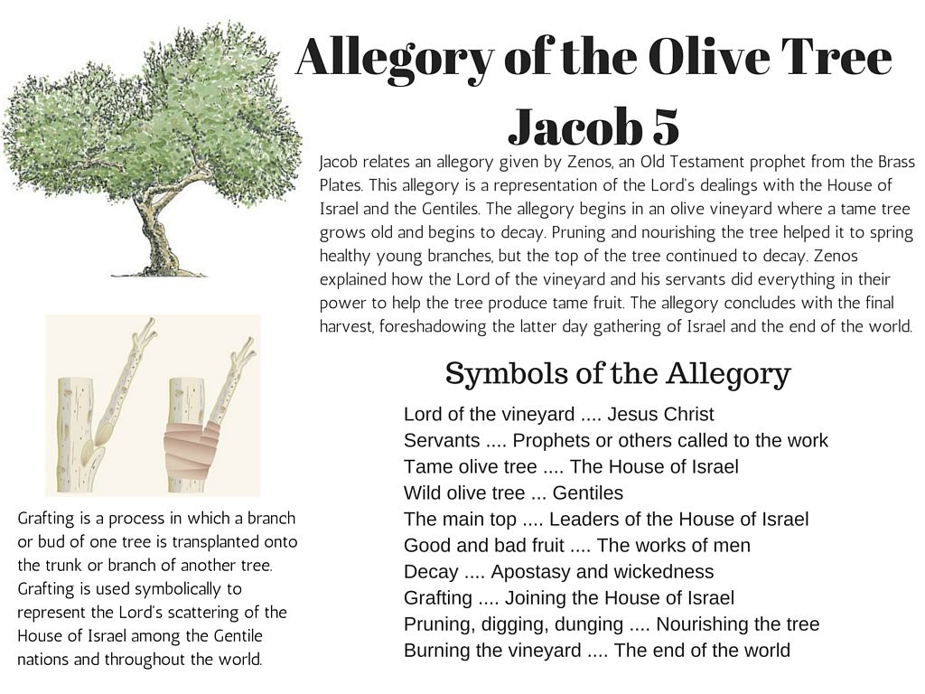 Allegory of the olive tree chart blogs pinterest chart allegory of the olive tree chart buycottarizona Choice Image