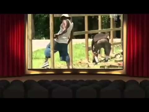 Pit Bulls And Parolees Season 5 Episode 10 Collision Course Pit Bulls Parolees Movies And Tv Shows Collision Course