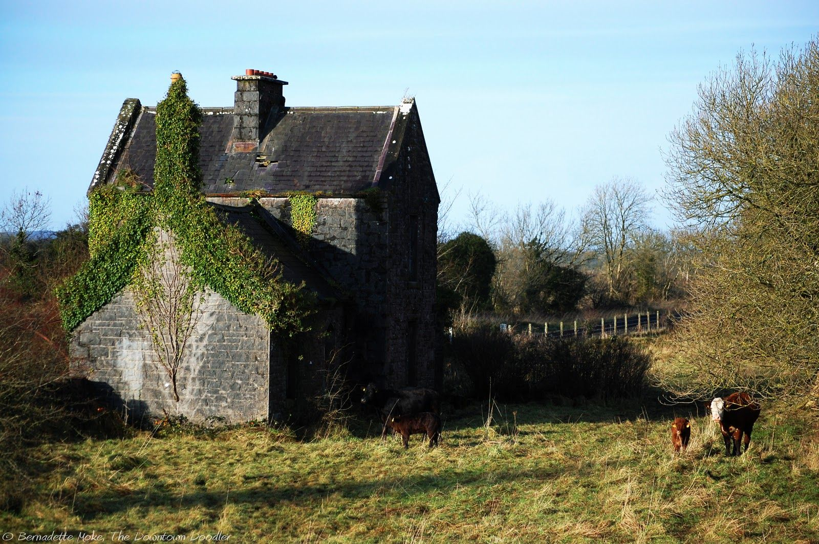 Home in Ireland