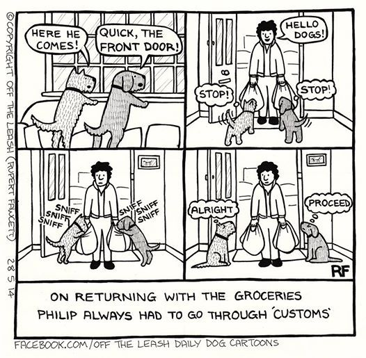 This is DEFINATELY our Cooper!!! hayhay023 Dog comics
