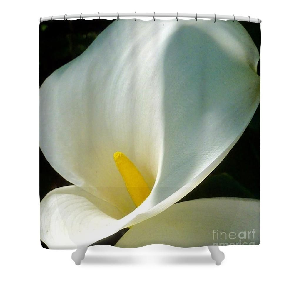 Calla Lily Elegance Shower Curtain By Susan Garren
