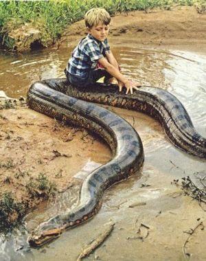Boy on a snake