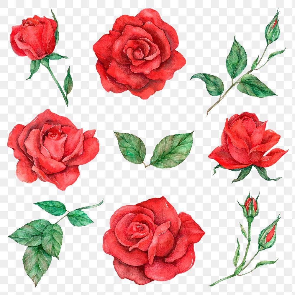 Rose And Leaf Set Transparent Background Free Image By Rawpixel Com Boom In 2020 Transparent Background Red Rose Flower Design Element