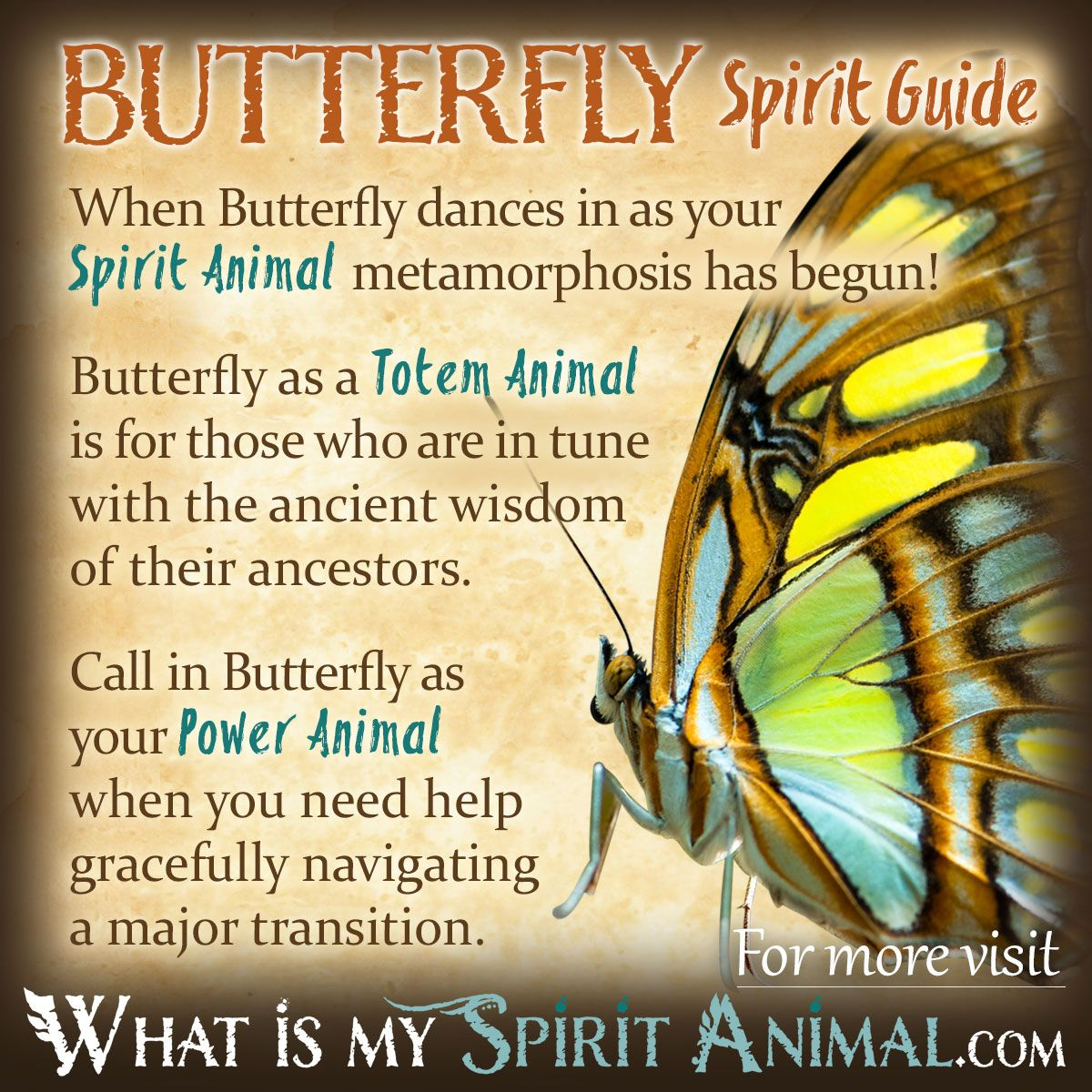 Butterfly symbolism meaning butterfly symbolism power animal butterfly symbolism meaning spirit totem power animal biocorpaavc Images