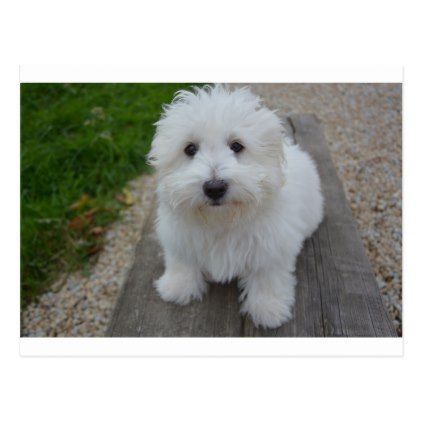 Coton On Bench Postcard Dog Puppy Dogs Doggy Pup Hound Love Pet Best Friend Dogs Cool Pets Safe Dog Toys