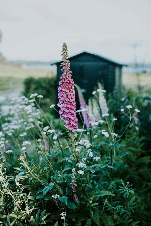 Photo of Cottage garden inspiration
