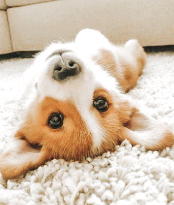 Idea By Hunter Pettengill On Pip Squeak Cute Baby Animals Cute