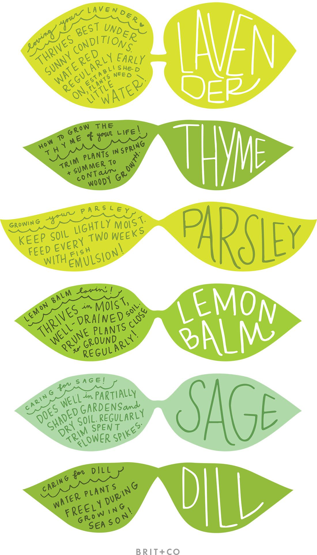 Magic image inside printable plant labels