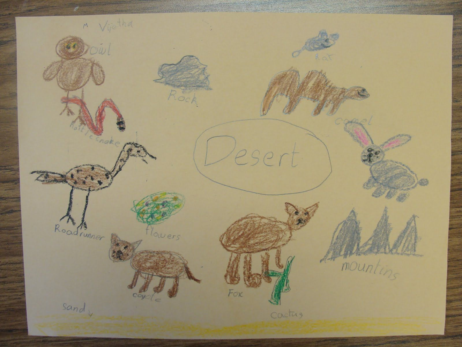 Habitat Ideas Desert