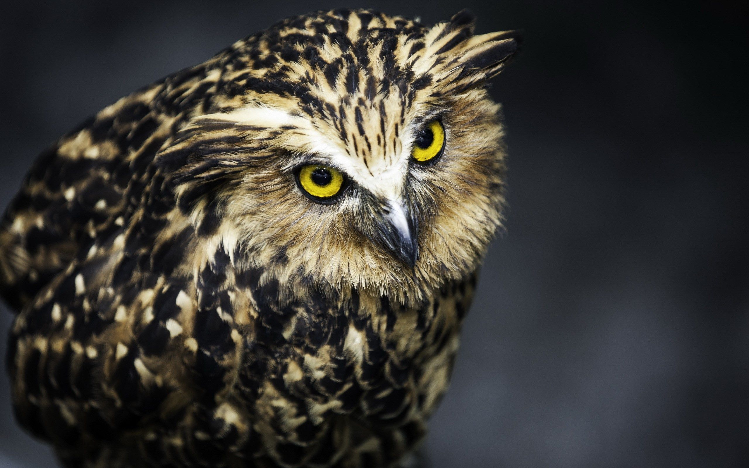 20170327 Free screensaver owl picture 1456953 Owl