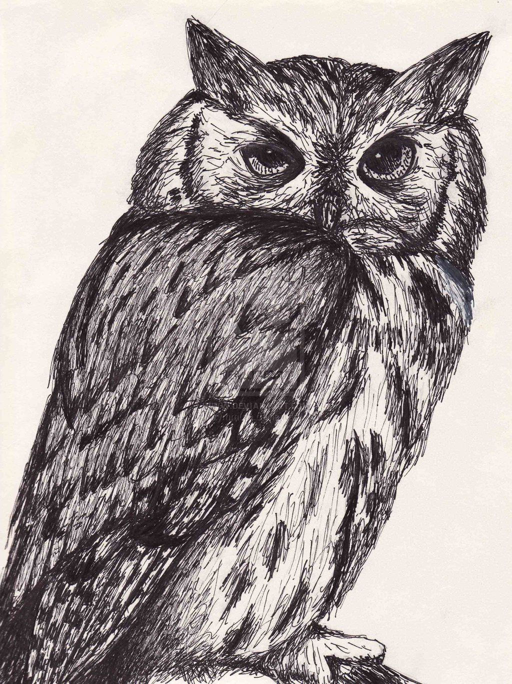 Animal Ink Drawings