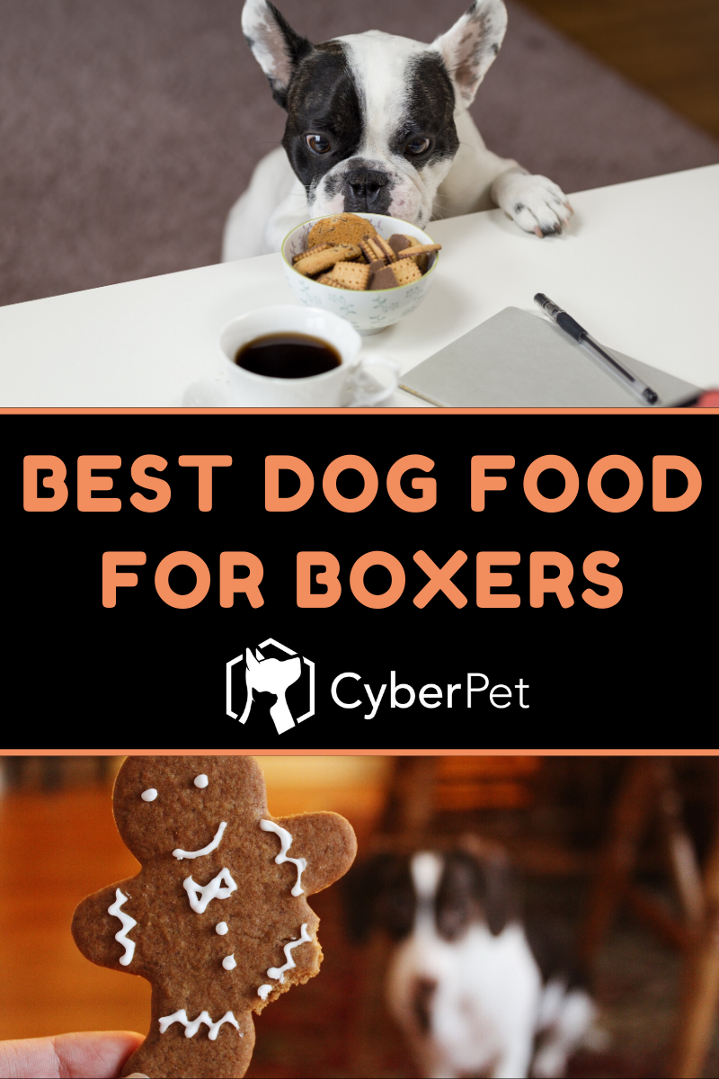 5 Best Dog Foods For Boxers To Stay Healthy In 2020 Cyberpet In 2020 Best Dog Food Best Dogs Dog Food Recipes