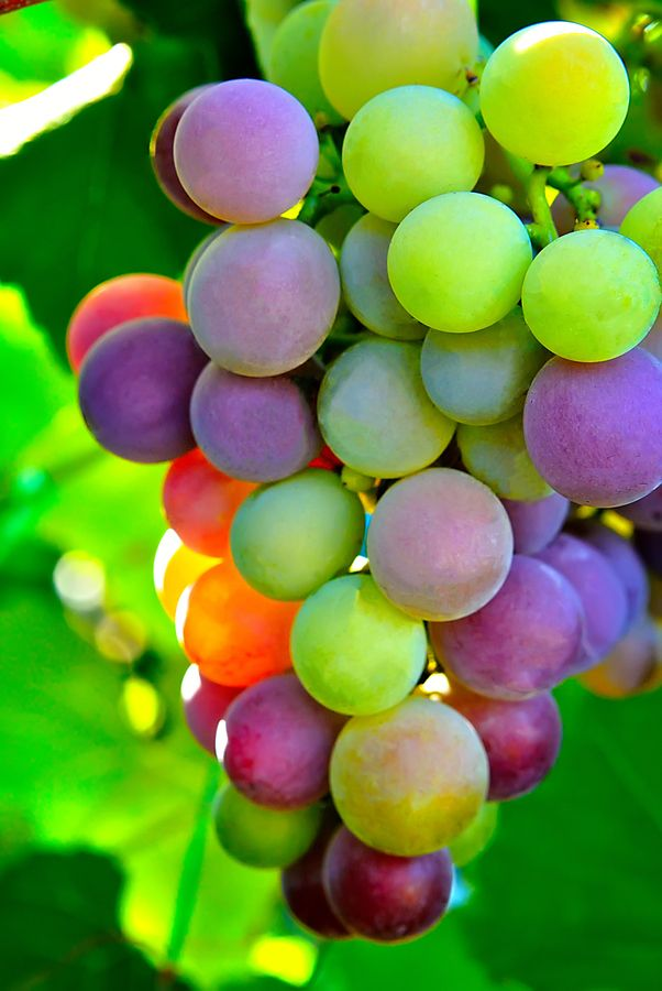 Colorful Bunch Of Grapes Fruit Photography Beautiful Fruits Grapes