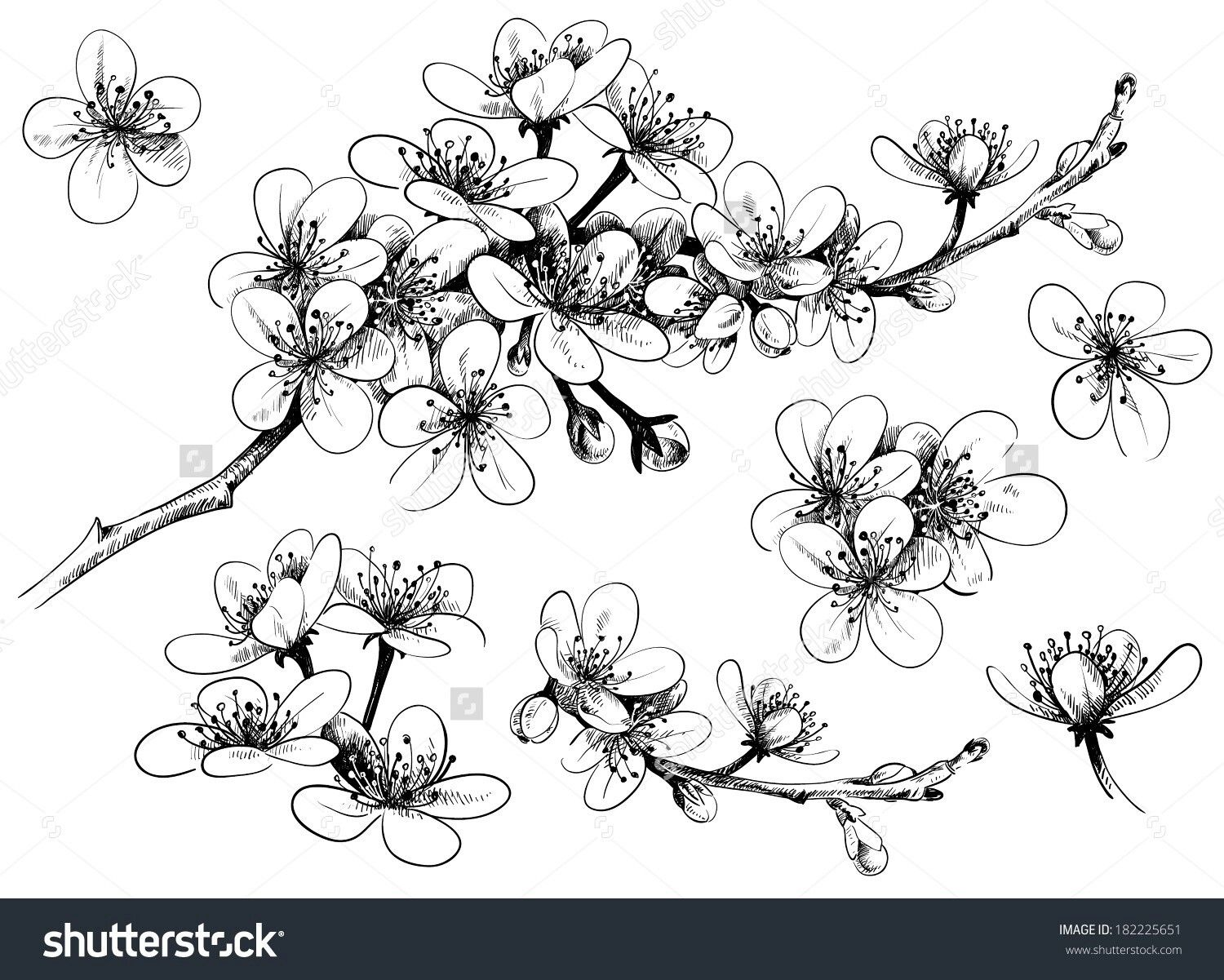 Uncategorized Drawing Cherry Blossom pin by tanya anderson on tattoos i like pinterest cherry see a rich collection of stock images vectors or photos for apple drawing you can buy shutterstock explore quality photo