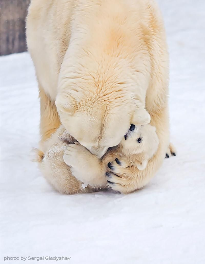 Most Touching Momma Bears and Their Cubs , http://coolvide.com/bears-mothers-cubs/