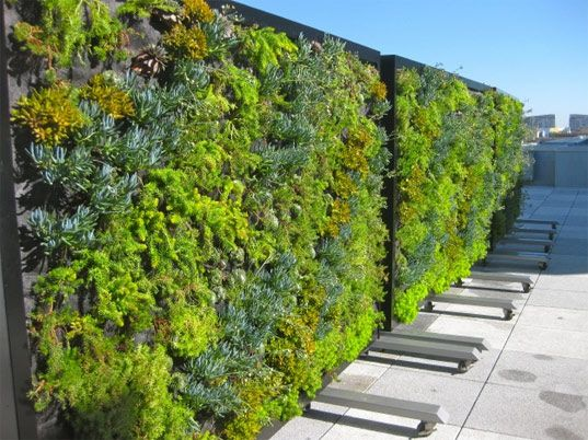 Habitat Horticulture recently installed 3 gorgeous green wall partitions  for The Metreon City View patio space