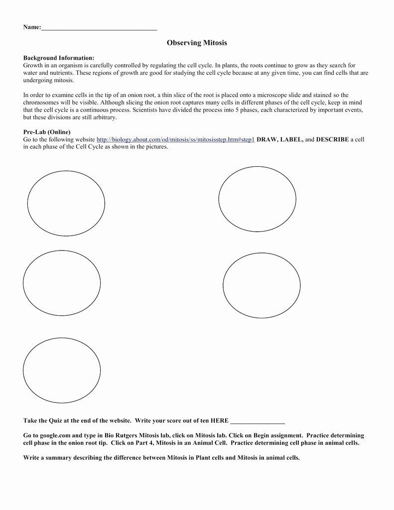 46+ The cell cycle coloring worksheet answer key Education