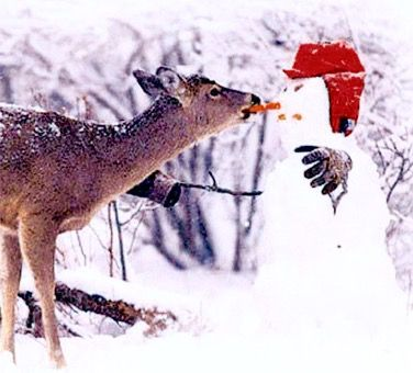 Deer Eating A Snowman S Nose Cute Animals Animals Snowmen Pictures