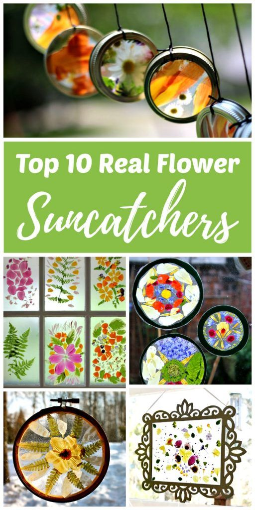 Top 10 Real Flower Suncatcher Crafts -   25 nature crafts flowers