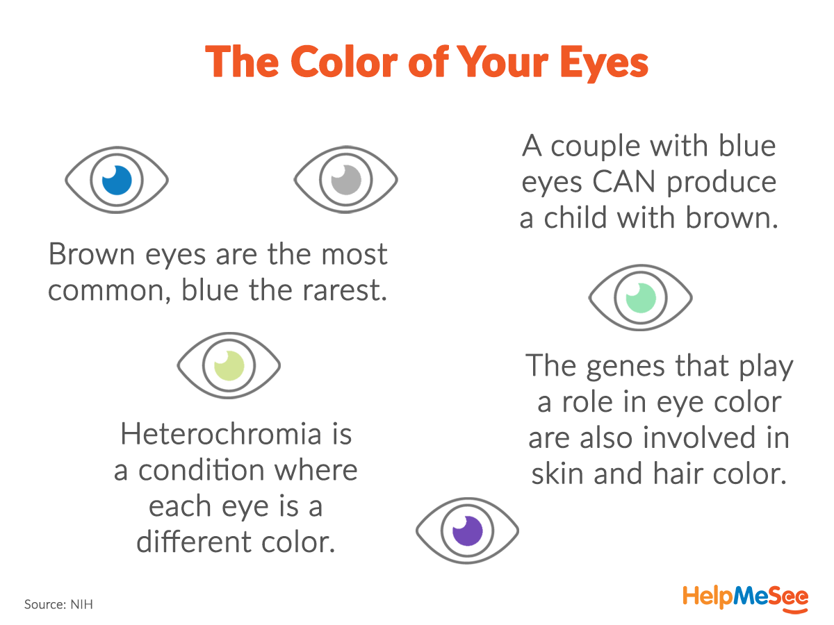 The Color Of The Eye Results From The Pigmentation In The