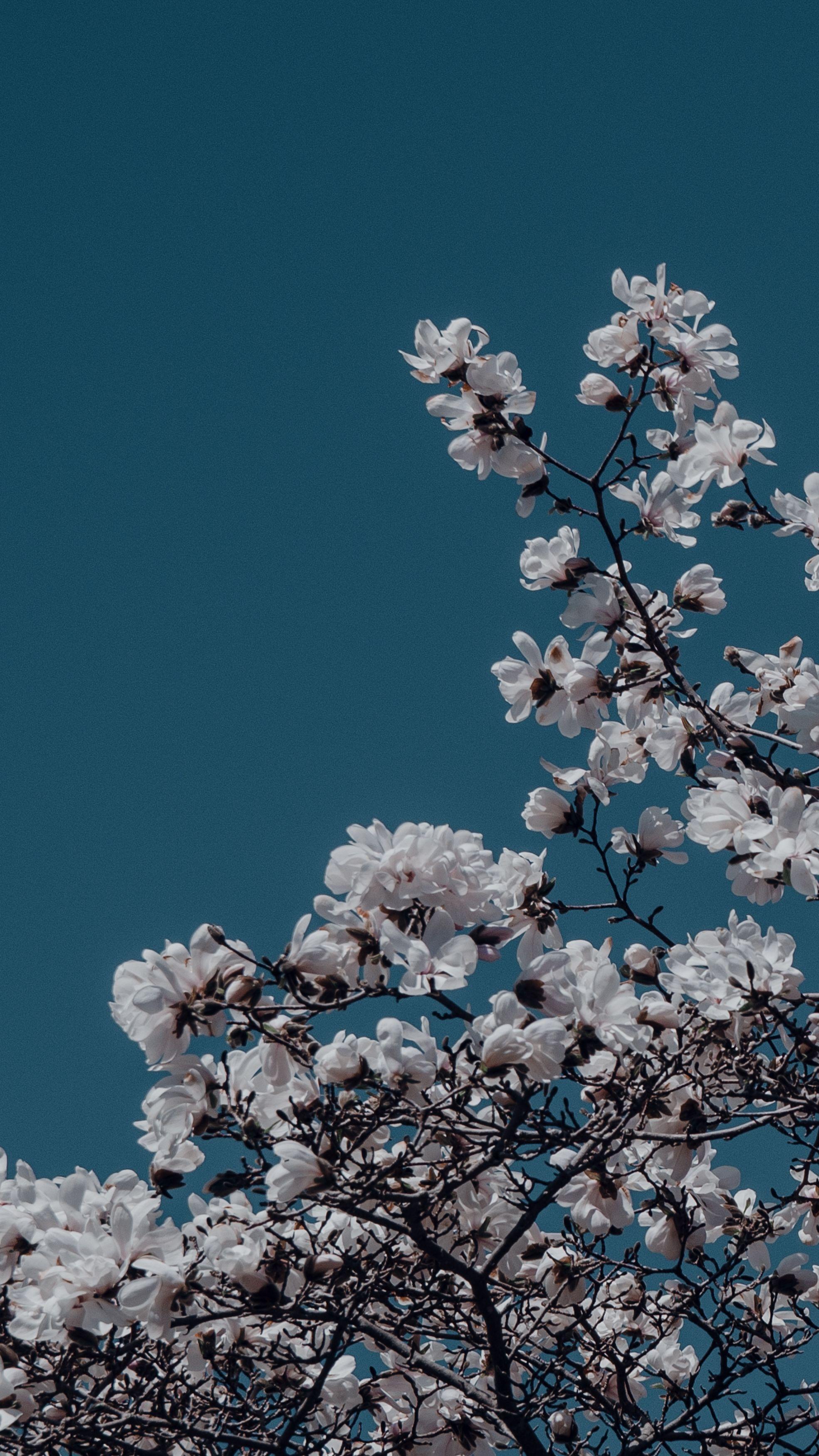 Beautiful Flowers Aesthetic Wallpaper Backgrounds For Iphone Vintage Flowers Wallpaper Flower Iphone Wallpaper Flower Aesthetic