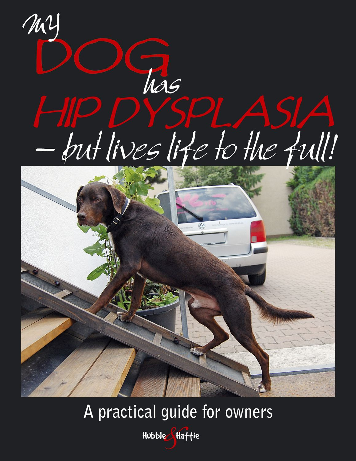 My dog has hip dysplasia but lives life to the full! My