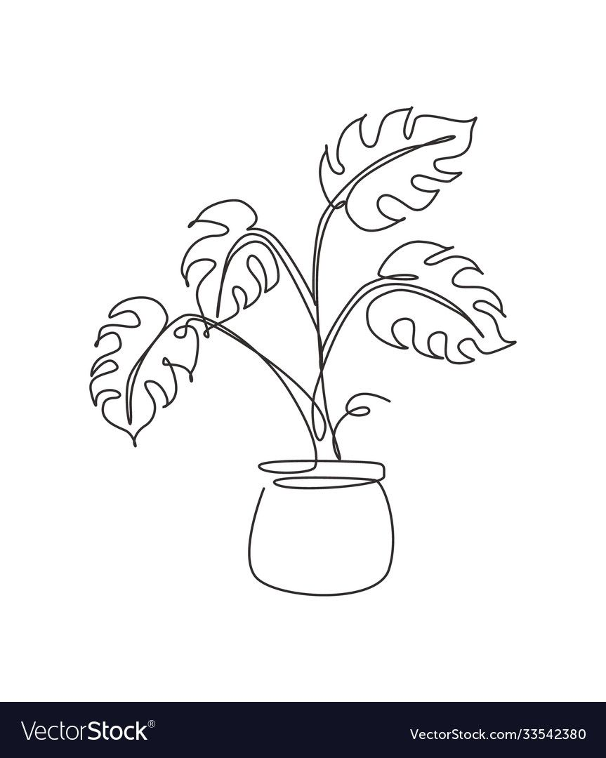 Single continuous line drawing tropical monstera vector image on VectorStock