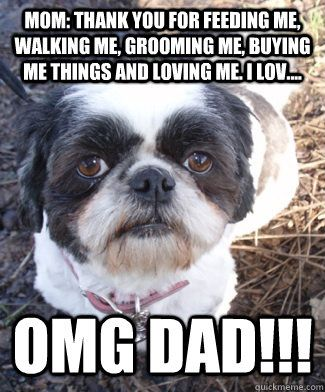Groomer Meme Shih Tzu Dog Shih Tzu Haircuts Shih Tzu