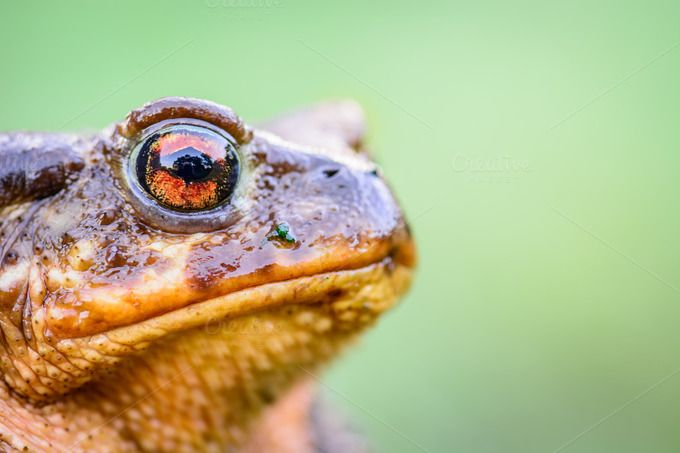 Toad frog on grass with big eyes by Charly Morlock Photos on Creative Market