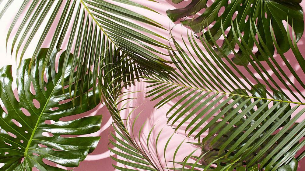 Inspiration 16 Pink And Green Weekend Creative Laptop Wallpaper Desktop Wallpapers Cute Desktop Wallpaper Plant Wallpaper