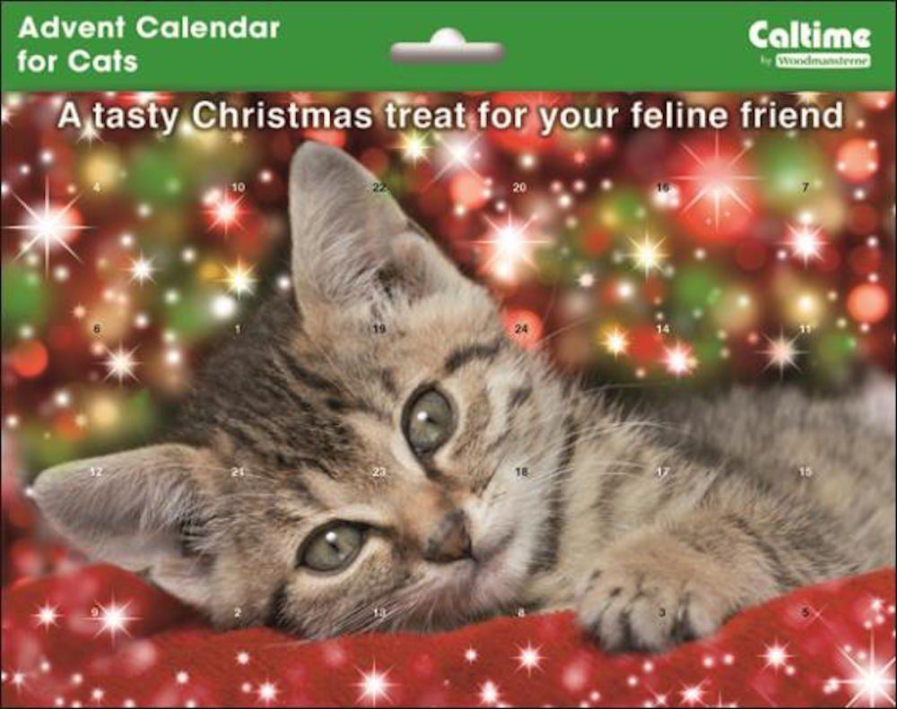 Grey kitten christmas advent calendar for the cat