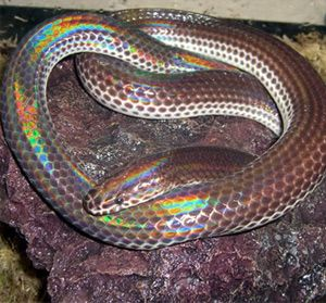 Rainbow Snake | www.pixshark.com - Images Galleries With A ...