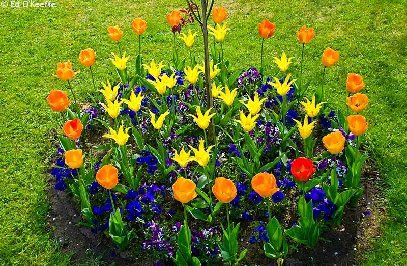 Colourful Round Flower Bed Raised Garden Designs Beautiful Flowers