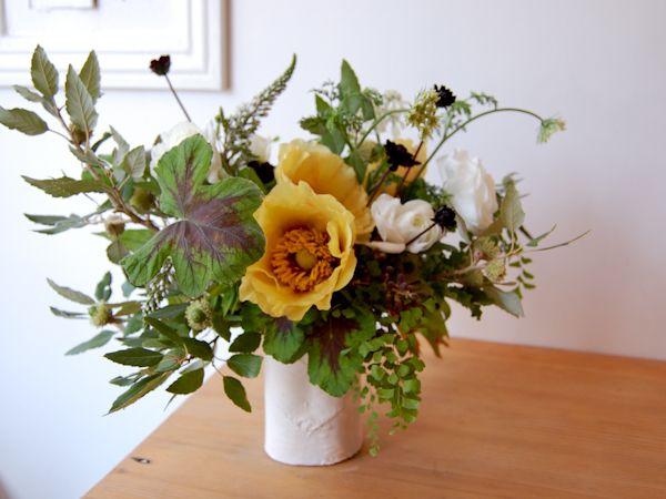 small stump and studio choo - Photos - flowerphotos