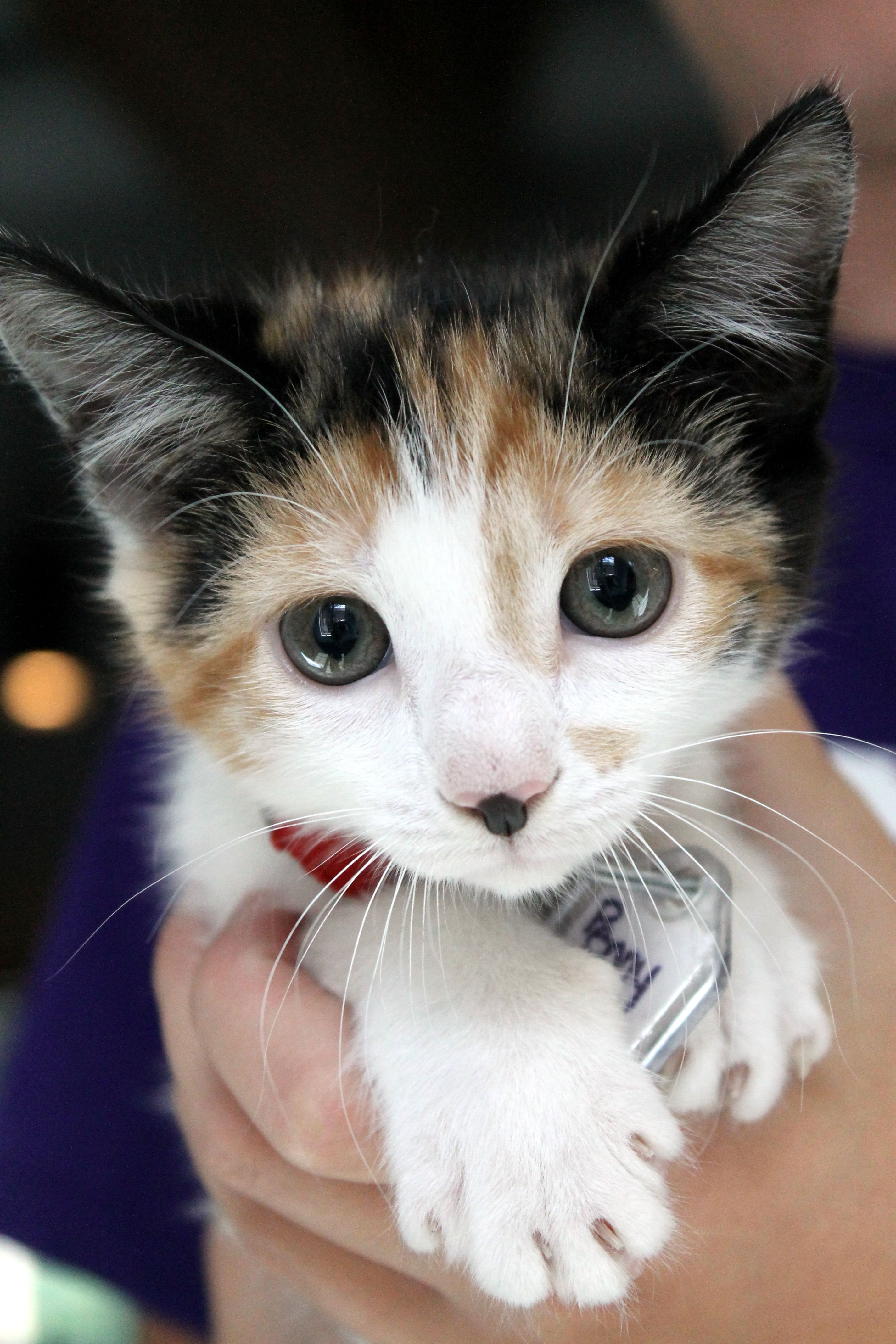 Adopted Penny Is An Adorable 2 Month Old Kitten With A Tiny Beauty Mark Kitten Kittens Animals