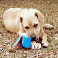 San Leon Tx Jade Adopt Donate Volunteer At Bay Area Pet Adoptions Spca Pet Adoption Pets Adoption