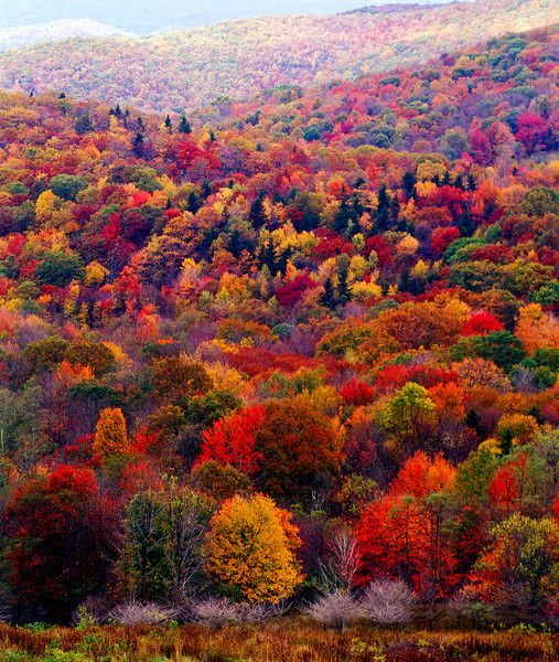 //Autumn view ~Grayson Highlands Virginia #fall