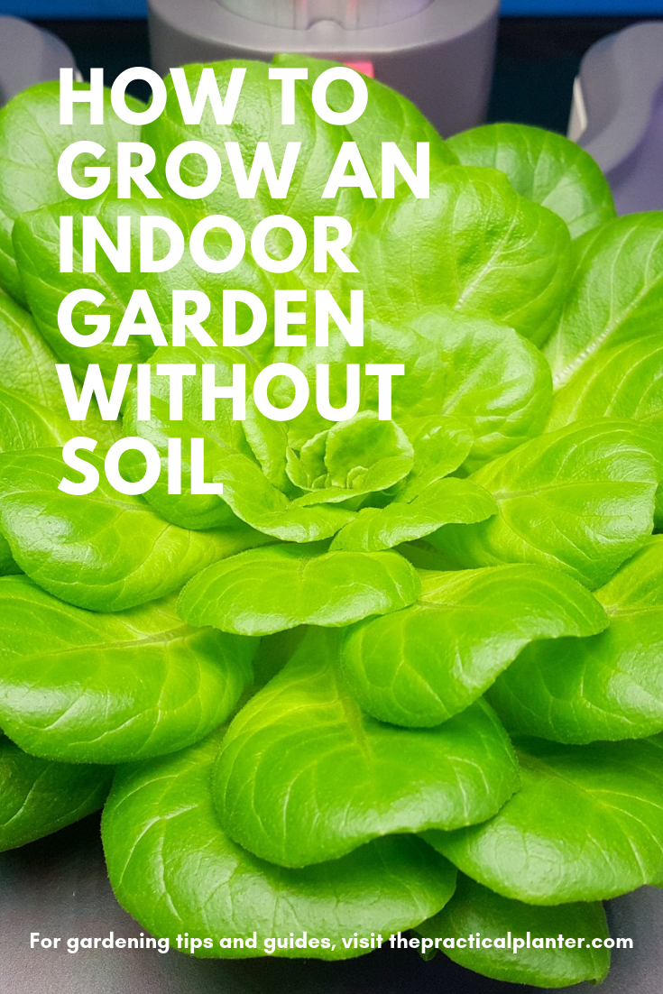 How To Grow An Indoor Garden Without Soil The Practical Planter Growing Lettuce Indoors Growing Vegetables Indoors Indoor Garden
