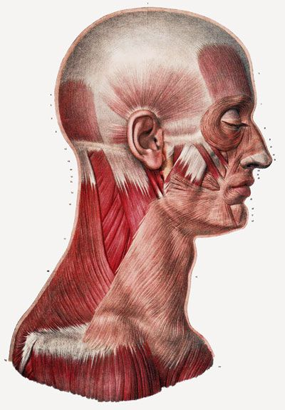 ml23 vintage 1800's medical human head neck muscle anatomy poster, Muscles
