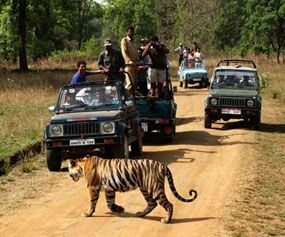 Jungle Safari In Chitwan National Park Nepal Jim Corbett