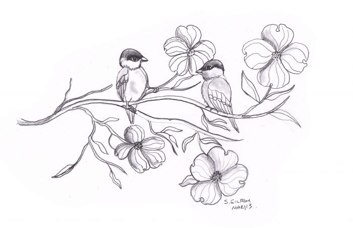 Dogwood Flower Sketch Drawings With Images Flower Sketches