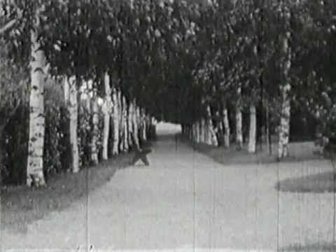 Kemi 1939 kaitafilmi
