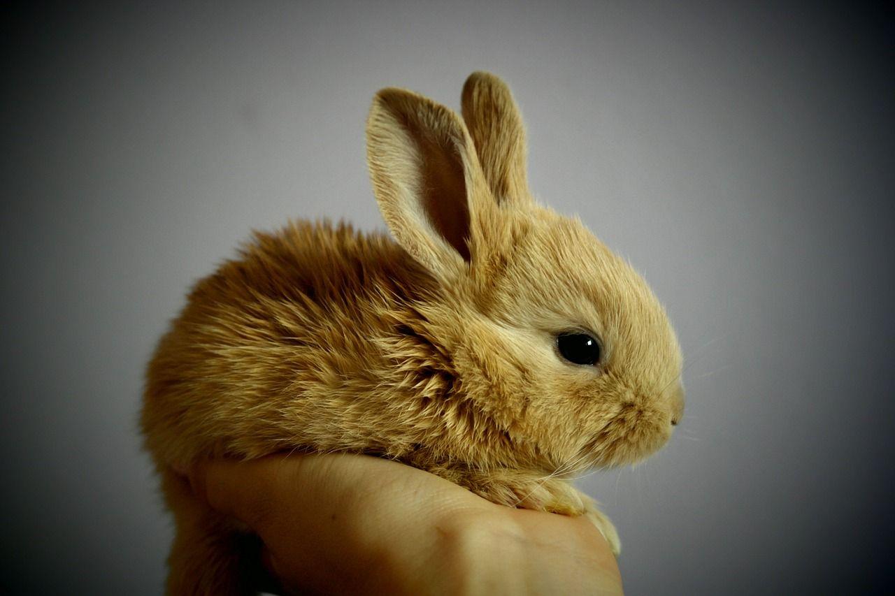 Super-cute baby rabbit.