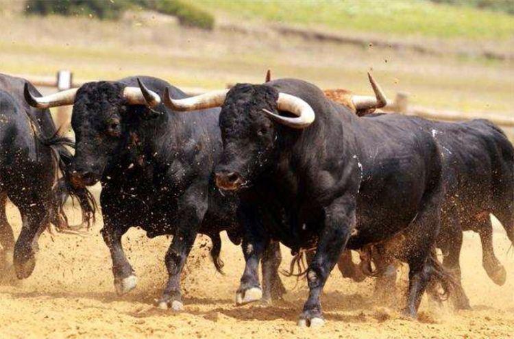 Resultado de imagen de toros bravos