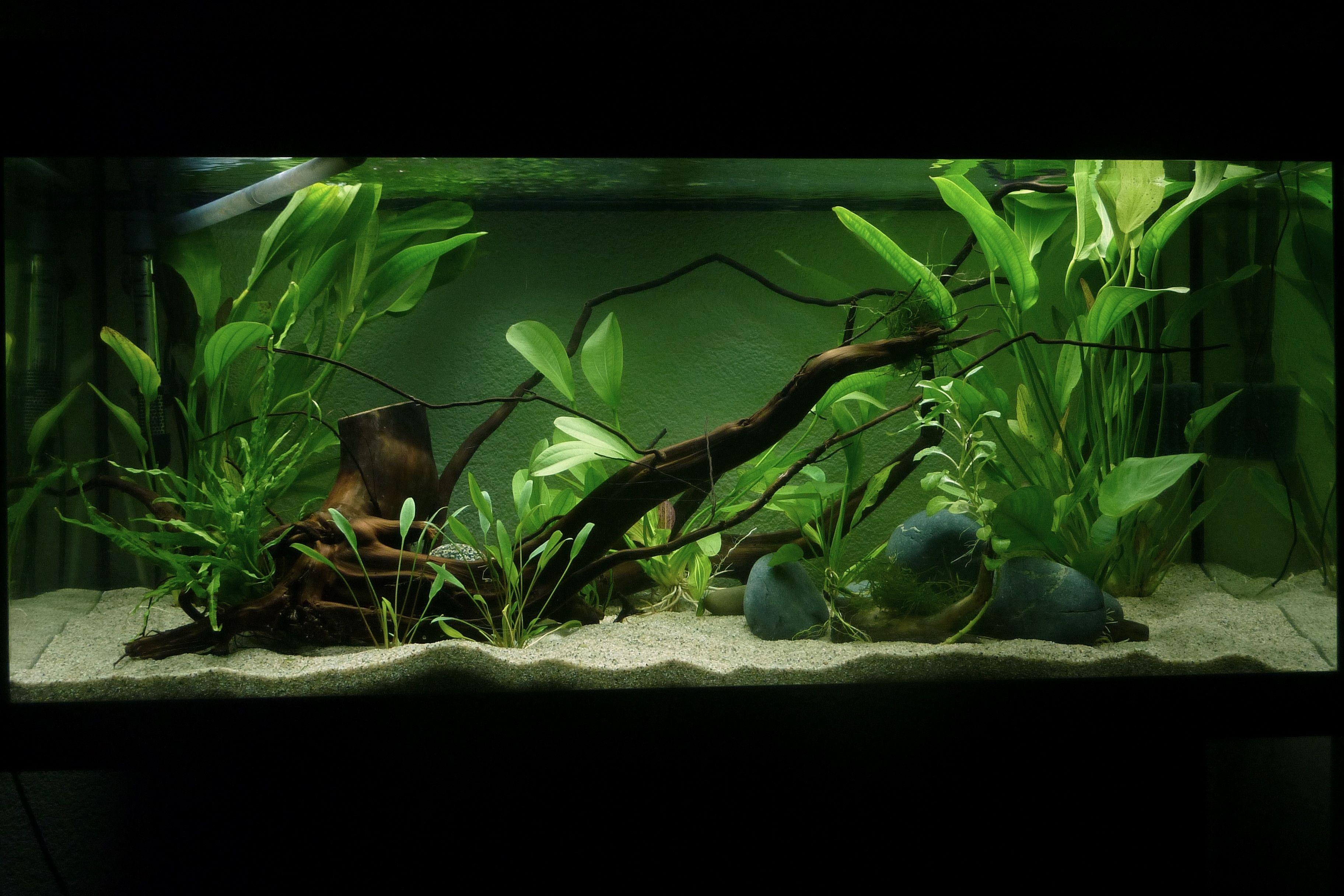 Aquarium 180 Liter Aquarien Haustierbedarf