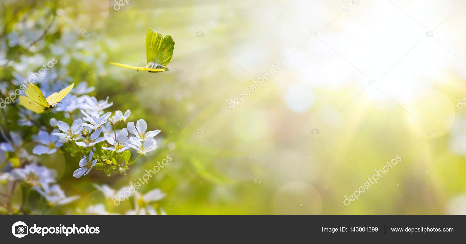 Free fresh flower background vector titanui wallpapers k