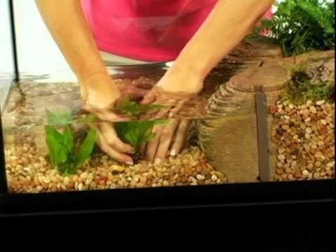 Tetracare For Semi Aquatic Turtle Environments Pets